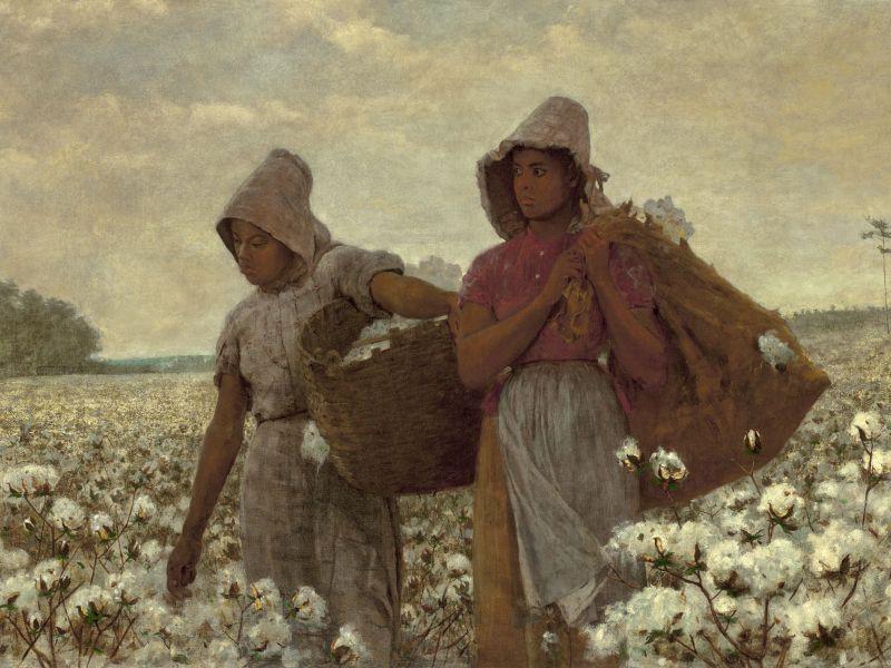 La viorne « douce » aux propriétés détournées au temps de l'esclavage